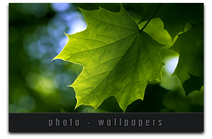 The Best Internet Photography and Wallpapers
